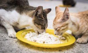 Rasulullah Saw Berkata Jangan Usir Kucing Yang Mendekati Kamu Saat Makan Ini Penjelasannya Islam Itu Indah